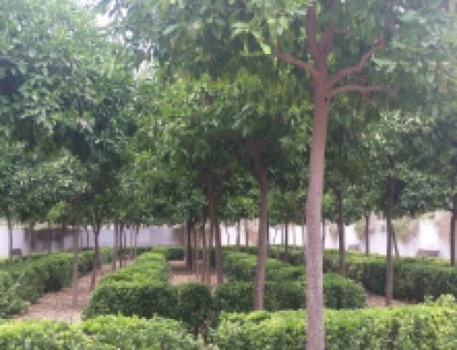 Un poème d'amour devenu un jardin: le parc de Polífilo à Valence